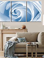 Protezala Canvas print umjetnosti Cvjetni White Rose Set od 3