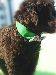 Cachorro Gravata/Gravata Borboleta Roupas para Cães Casual Geometrico Laranja Azul