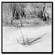 Tryckta Konst på kanvas Twigs och skuggor av Harold Silverman - Strand, palmer och Fyrar med Strethed Frame