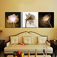 Stretched Canvas Art Botanical Growth Set of 3