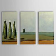 Trasferimenti su tela Art Landscape Gards di Oasis di Pablo Esteban Set di 3