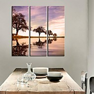 Stretched Canvas Art Botanical Reflection in Water Set of 3