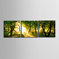 Stretched Canvas Art Landscape Yellow Light though the Forest Set of 3