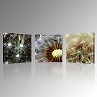 Paesaggio / Botanical / Fotografia / Moderno / Romantico Print Canvas Tre Pannelli Pronto da appendere , Quadrato