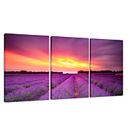 VISUAL STAR®Lavender Flower Garden Triptych Canvas Printing Sunset Scenery Wall Art Ready to Hang
