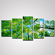 5 Panels Green Trees Picture Print on Canvas Unframed