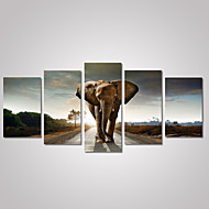 5 Panels Elephant on The Road Picture Print on Canvas Unframed