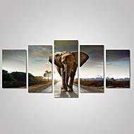 Animal / Paysage / Photographie / Religion & Spiritualité Toile Cinq Panneaux Prêt à accrocher , Format Horizontal