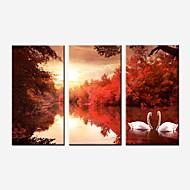Paisagem / Botânico / Fotografia / Realismo / Romântico Impressão em tela 3 Painéis Pronto para pendurar , Vertical