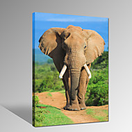 VISUAL STAR®Elephant Photo Digital Canvas Print Animal Wall Picture For Home Decor Ready to Hang