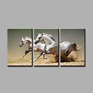 Handgeschilderde DierenModern / Realisme Drie panelen Canvas Hang-geschilderd olieverfschilderij For Huisdecoratie