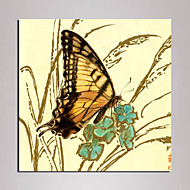 Mini Size Animal butterfly Canvas Print One Panel Ready to Hang