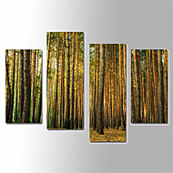 Landschap Canvas Afdrukken Vier panelen Klaar te hangen,Verticaal