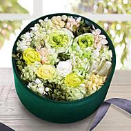 růže zachovány čerstvé květiny dnem přítomnosti matky
