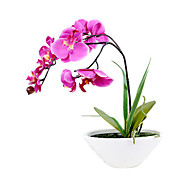 "9,8 ""l 11.4"" h elegante Phalaenopsis im Keramiktopf"