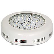 150W LED-kasvivalo 72 Teho-LED 3220-3680 lm Lämmin valkoinen Punainen Viininpunainen UV AC 85-265 V 1 kpl