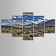 Stampe fotografiche Paesaggi Modern Realismo,Cinque Pannelli Tela Qualsiasi forma Stampa artistica Decorazioni da parete For Decorazioni