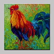 Pintados à mão Animal Quadrangular,Moderno Estilo Europeu 1 Painel Tela Pintura a Óleo For Decoração para casa