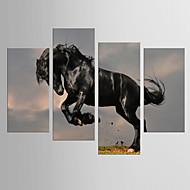 Impresiones de Arte Animal Modern Clásico,Cinco Paneles Lienzos Cualquier Forma lámina Decoración de pared For Decoración hogareña