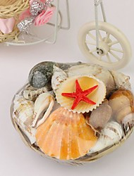 Wedding Décor Authentic Seashells - Small