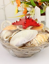Wedding Décor Authentic Seashells - Big