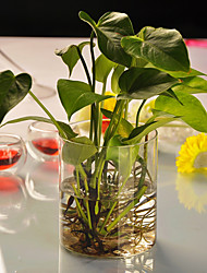 Table Centerpieces Cylinder Shaped Glass Vast  Table Deocrations