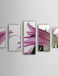 Hand Painted Oil Painting Floral Lily Set of 5 with Stretched Frame 1307-FL0167