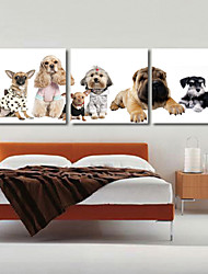 Stretched Canvas Art Animal Dogs Set of 3