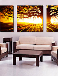 doek set van 3 landschap grote boom bij zonsondergang stretched canvas afdrukken klaar te hangen