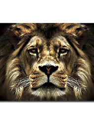 Stretched Canvas Art Animal Lion by SD Smart
