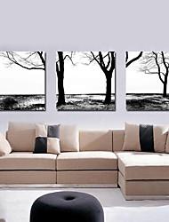 Stretched Canvas Art Landscape Tree Set of 3