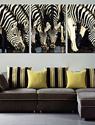 Stretched Canvas Art Animal Zebra Group Set of 3