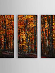 Натянутым холстом искусств Ботанический лес Плотность Филипп Сен-Лоди Набор из 3