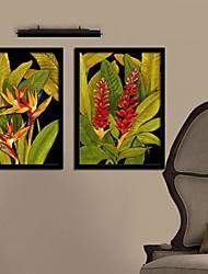 Color Of  A Flower Flowers  Framed Canvas Print Set of  2