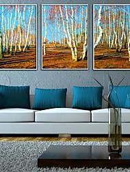 Pintura decorativa Jungle Framed Canvas Juego de 3