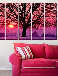 Stretched Canvas Art  Collected in The Shadows Set of 5