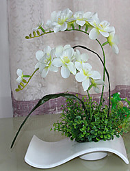 "24 ""H Phalaenopsis in Waved Vaso in ceramica"