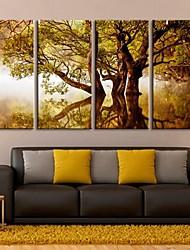 toile tendue art les ombres de l'arbre dans l'ensemble des quatre lac du paysage