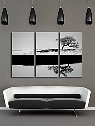 étiré noir d'art de toile et ensemble arbre blanc de 3