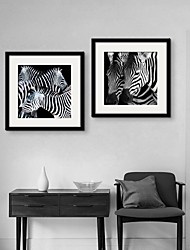 Zebra Framed Canvas Print Set of 2