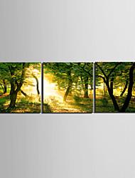 Натянутым холстом садово-паркового искусства желтый свет, хотя лес Набор из 3