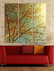 Memórias de Ouro Canvas Art Set Botânico de 3
