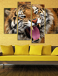 Stretched Canvas The Tiger Decoration Set of 4