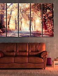 E-HOME® Stretched Canvas Art The Fall Of The Mangrove Decorative Painting  Set of 5