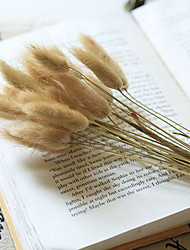 Qihang Dried Flowers Hare's Tail Grass Photography Props(20 pieces)