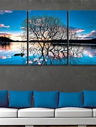 e-Home® opgespannen doek zijt de weerspiegeling van de bomen decoratie schilderij set van 3