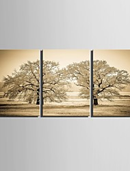 E-HOME® Stretched Canvas Art Tree Decoration Painting Set of 3