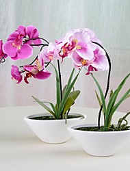 """9.8 """"l 11.4"""" h elegante phalaenopsis in keramische pot"""