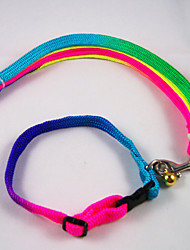 Colorful Collar 1 Cm For Dogs