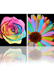 VISUAL STAR®Colorful Flower Stretched Canvas Printing Art Group Canvas Wall Art Ready to Hang